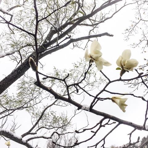 flowersJPG.jpeg