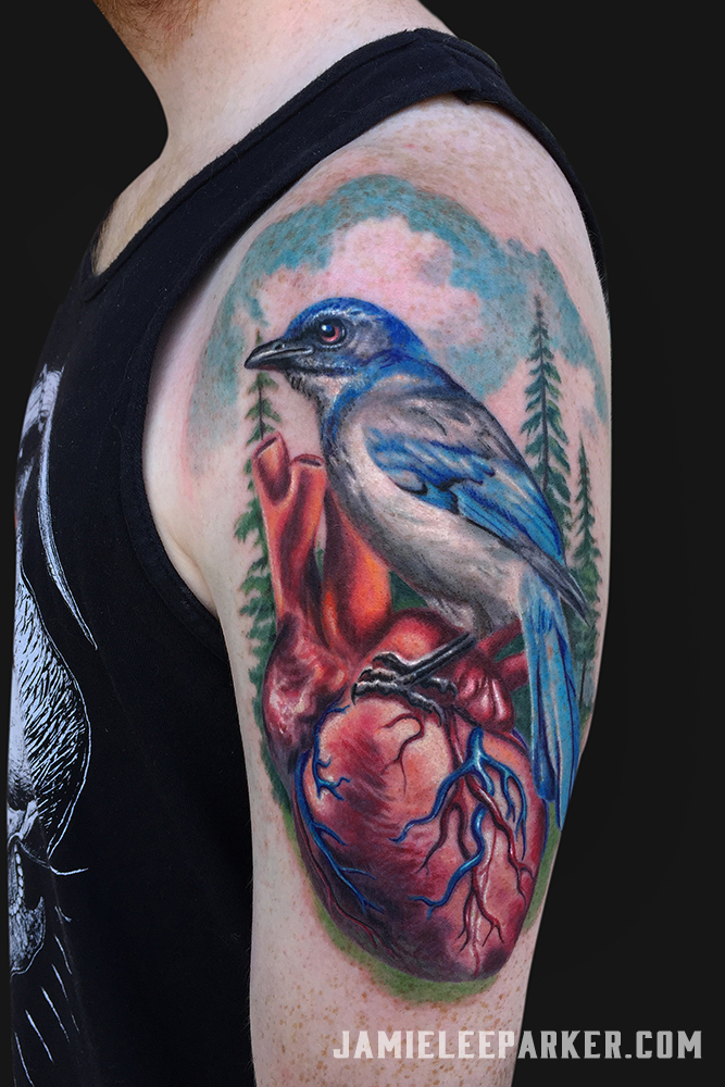 Bluejay on Human Heart