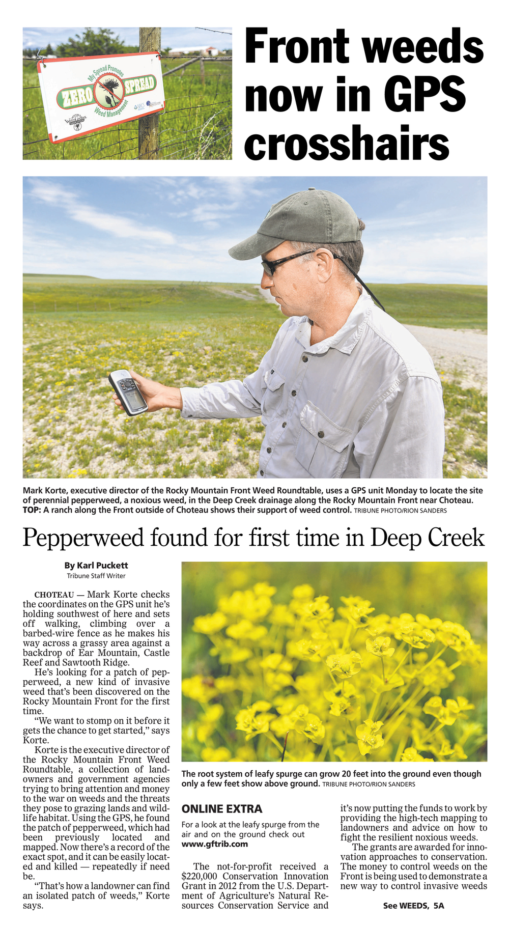 Perennial Pepperweed_TribuneArticle6.25.2013 1.jpg