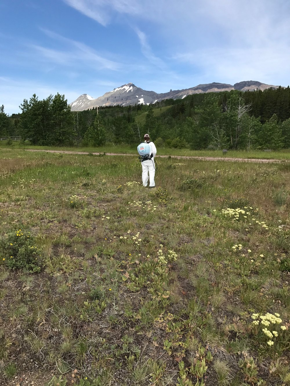 Backpack spraying Marias Pass 2017