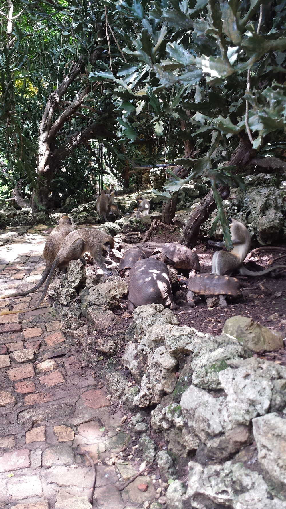 The monkeys and tortoises eat from the same area - lessons for humans maybe?