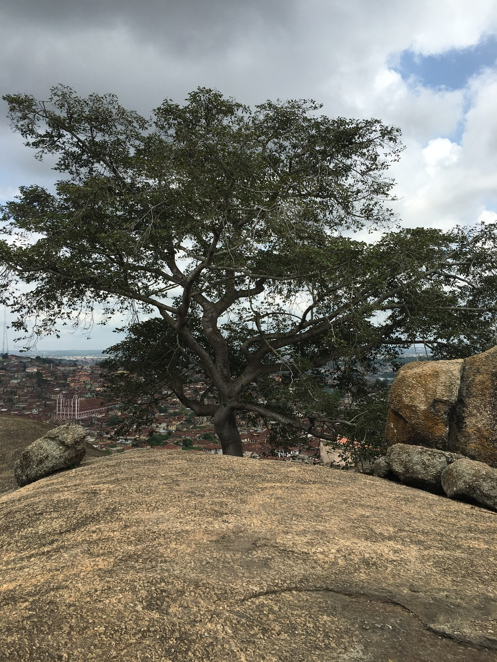 From the top, you can see this Iroko Tree, which they say is over 200 years old and never sheds its leaves - come rain or shine!