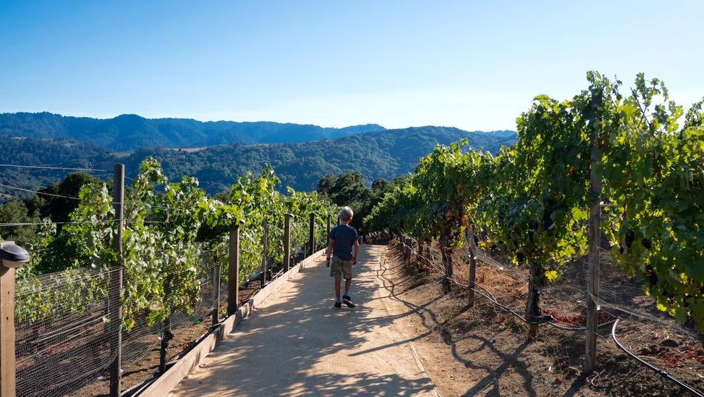 House Family Vineyards, Saratoga, California