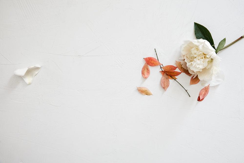 SJC_Flower.jpg