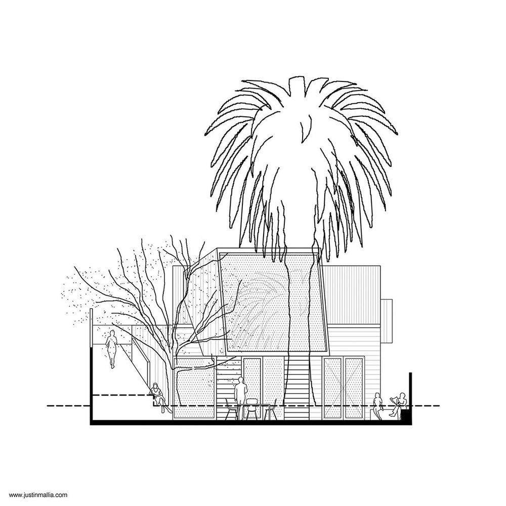 mallia_palmtree_00.jpg