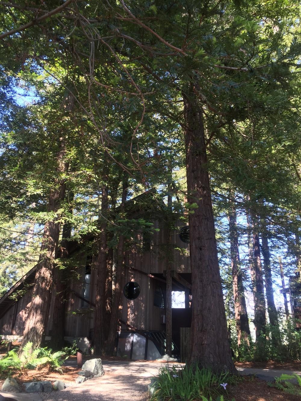 Post Ranch Inn Tree House