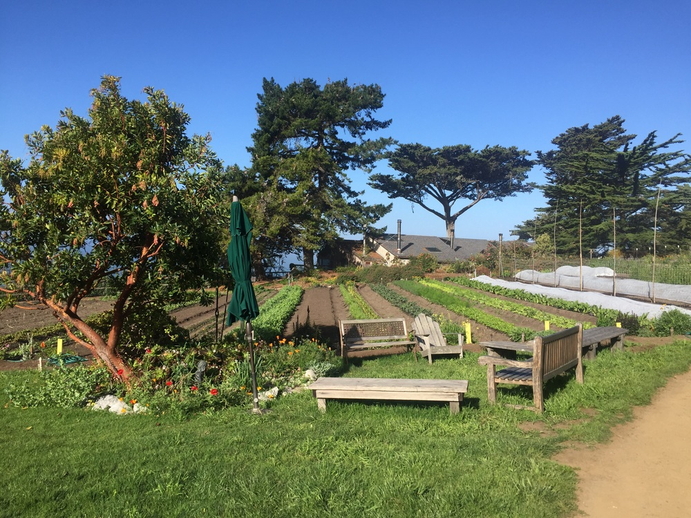 For over 40 years the Esalen Institue provides a holistic model of growing local organic foods for all guests and residents on the grounds.