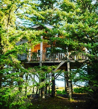 Nestled in the canopy of a Spruce grove....Highwater House sits securely among the trees overlooking the mouth of the Sangan river, the beach and beyond. #treehouse #naturalbeauty #haidagwaii #lookingbirdsintheeye