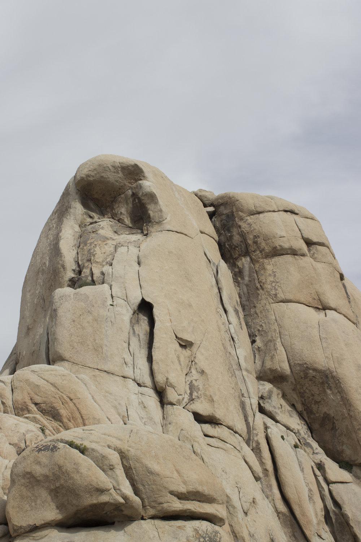 J Tree Rocks.jpg