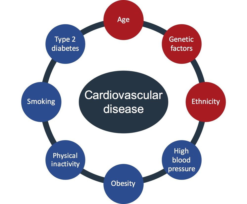 Modifiable (blue) and non-modifiable (red) risk factors for cardiovascular disease.