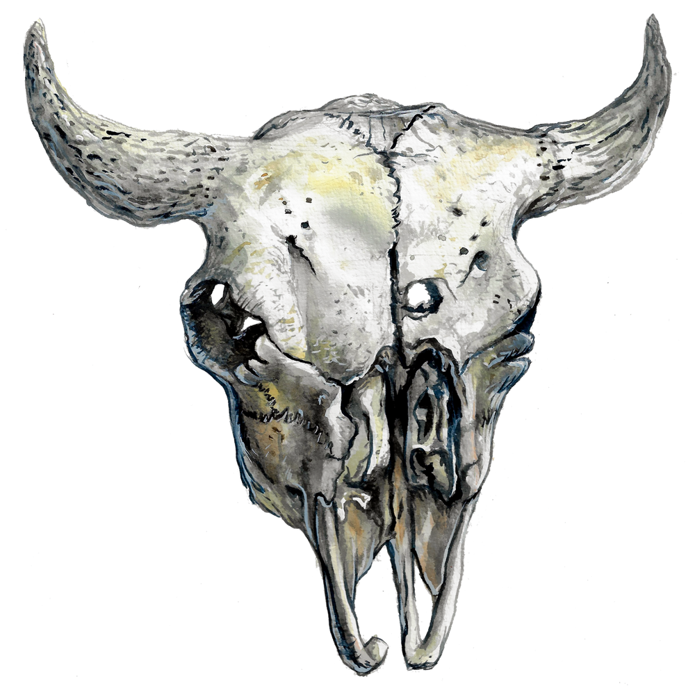 Bison Skull , watercolour on paper, 2017
