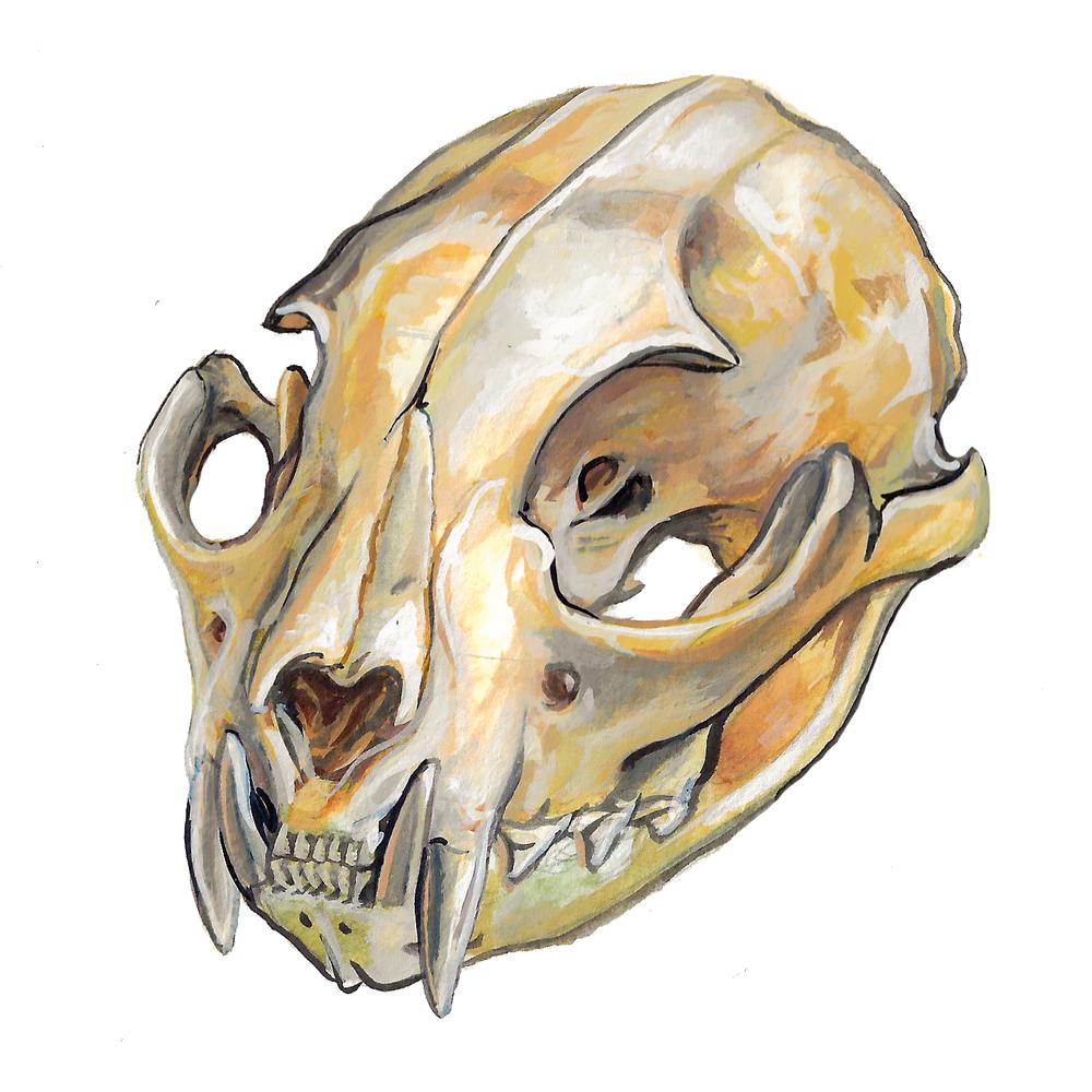 Persian Lynx Skull , gouache on paper, 2017