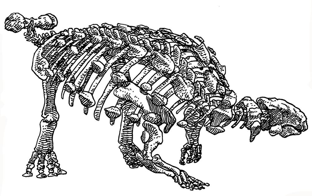 Euplocephalus , 2017
