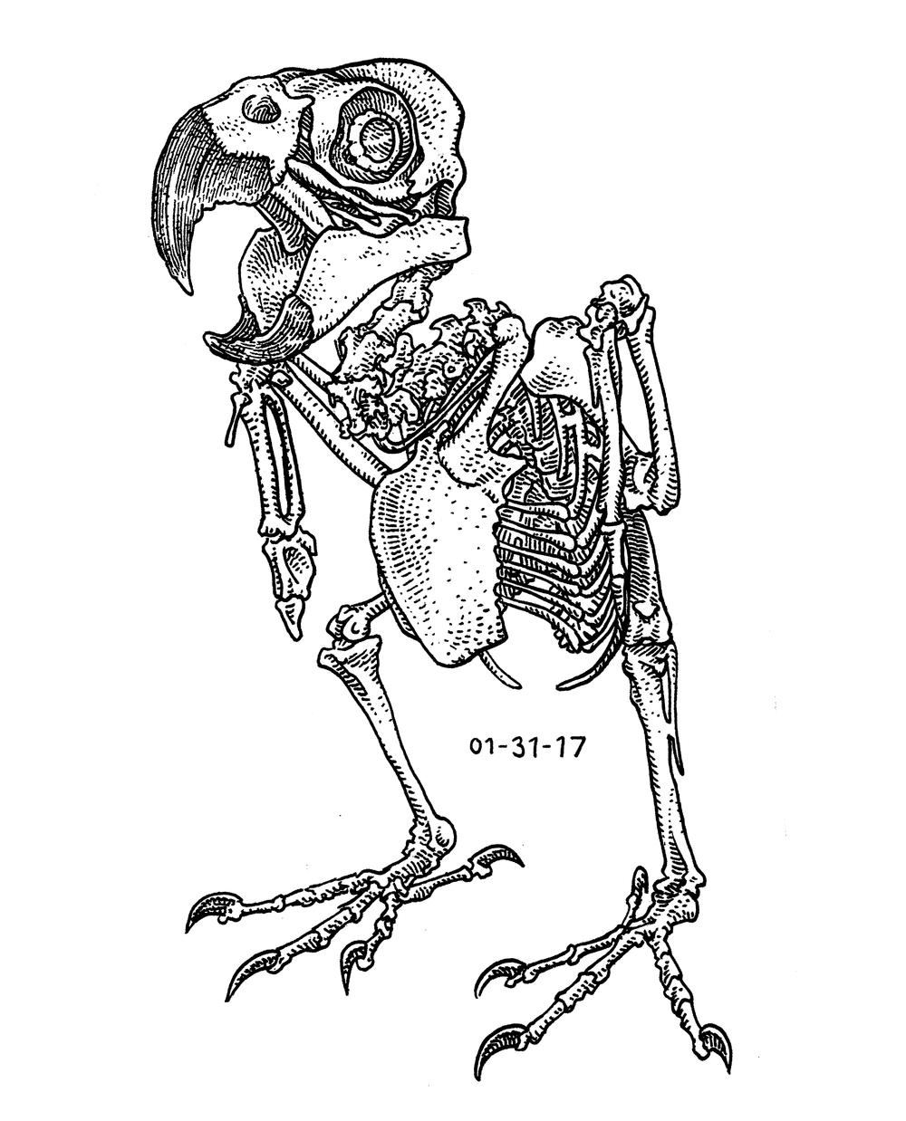 Parrot Skeleton , 2017