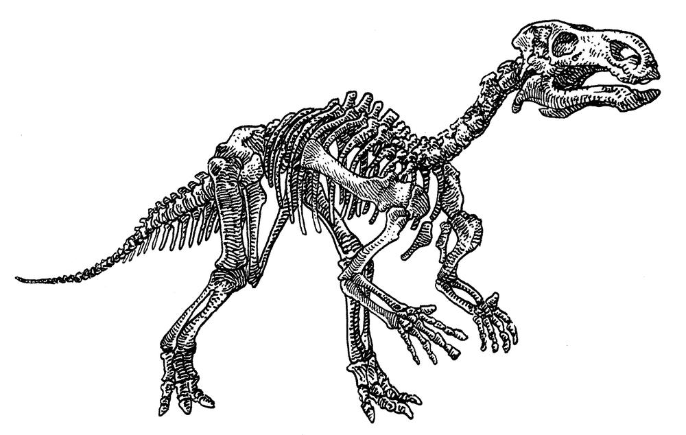 Mantellisaurus , 2017