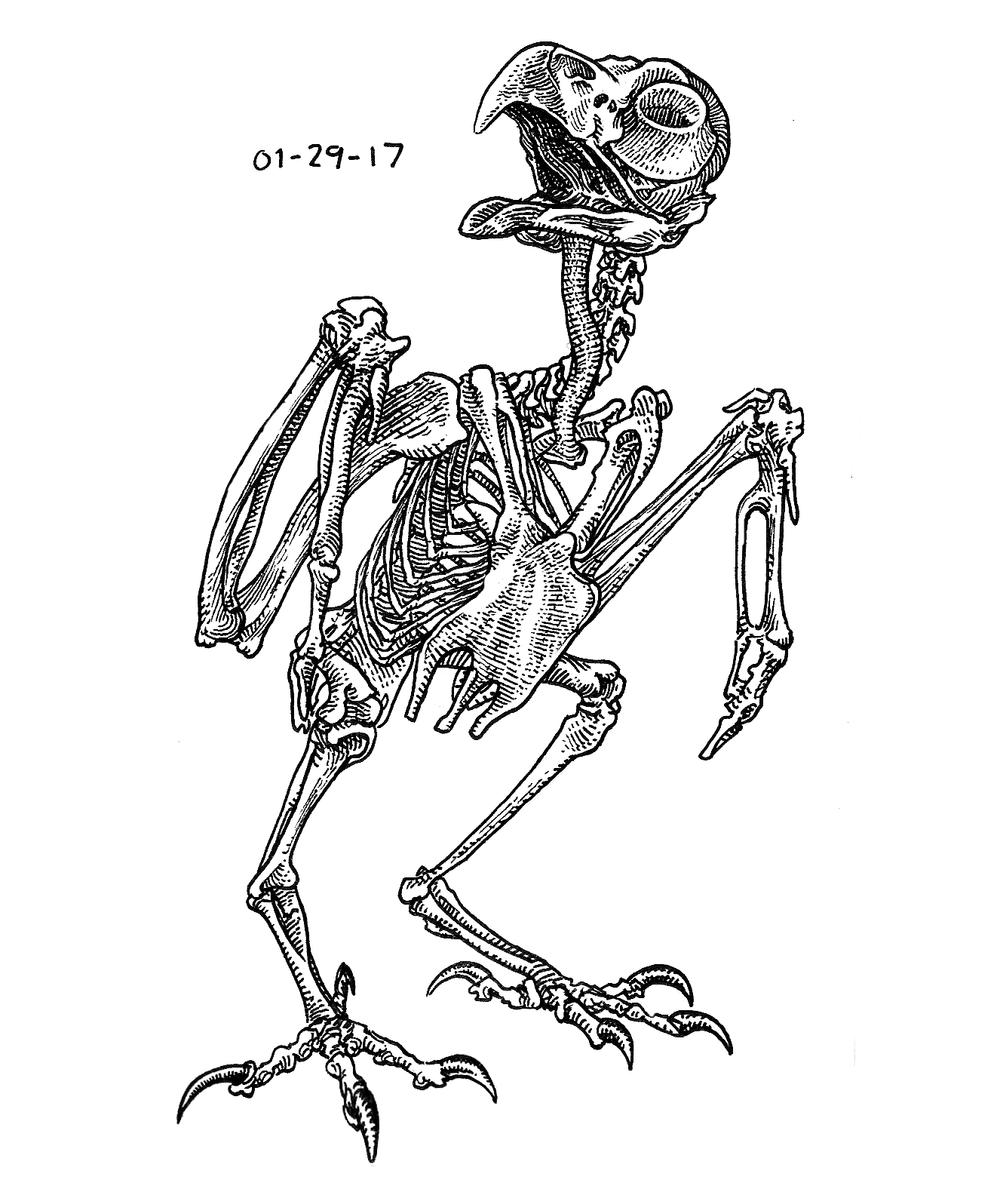 Owl Skeleton , 2017