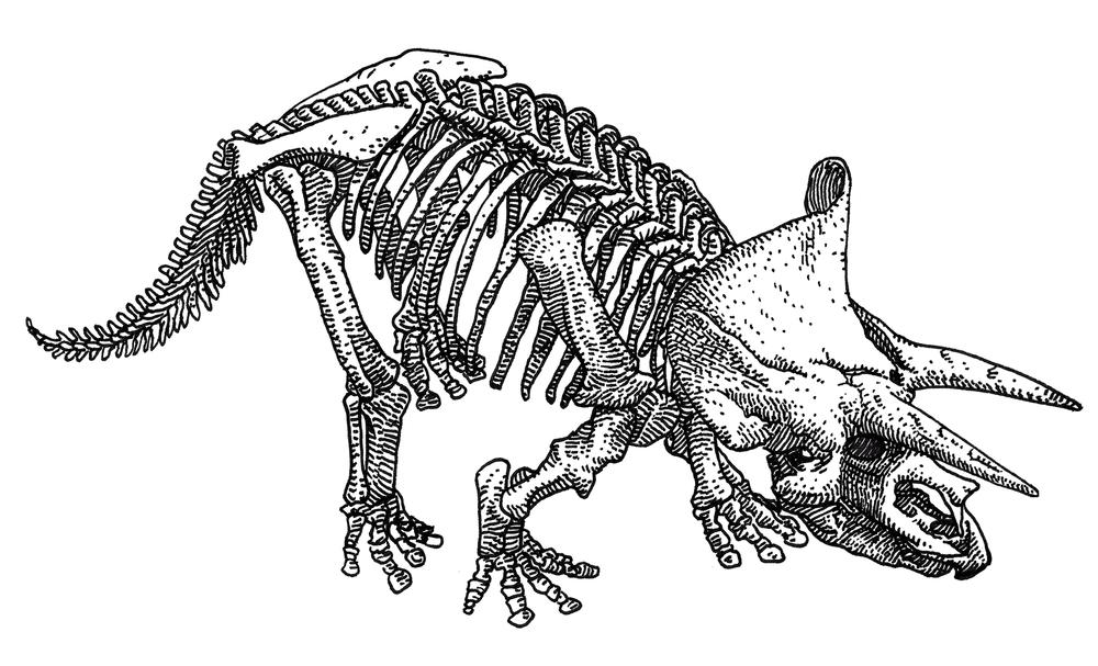 Triceratops , 2017