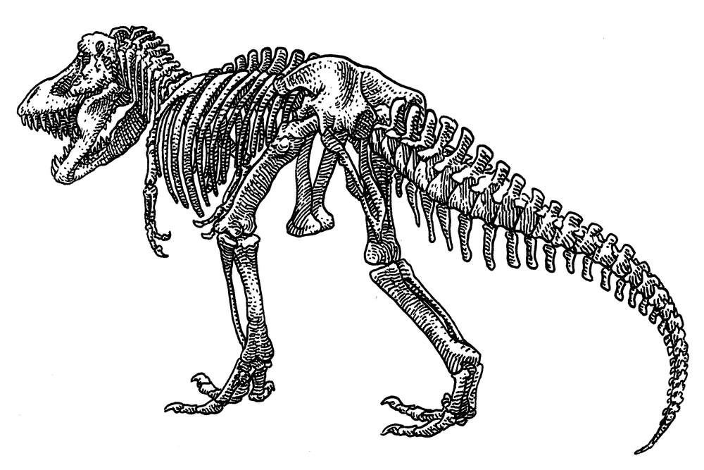 T. rex , 2017