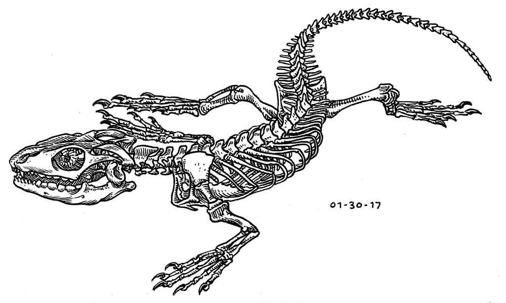 Monitor Lizard Skeleton , 2017