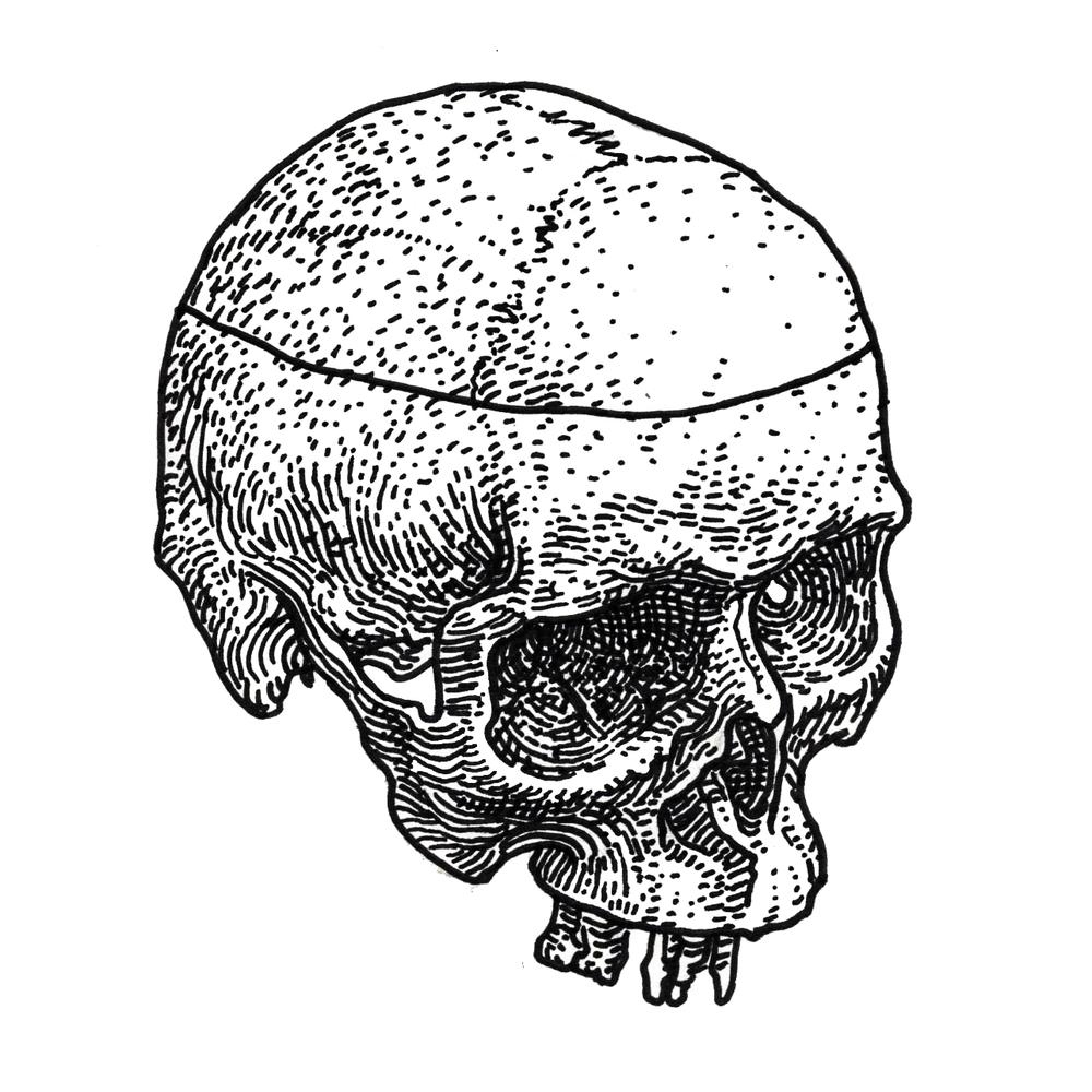 Human Skull , 2017