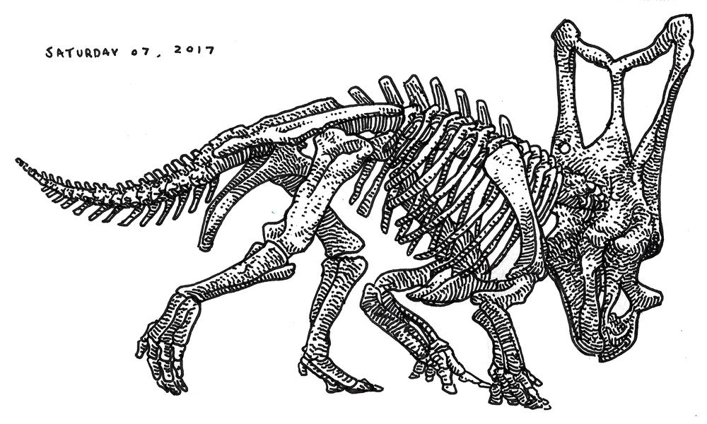 Chasmosaurus , 2017