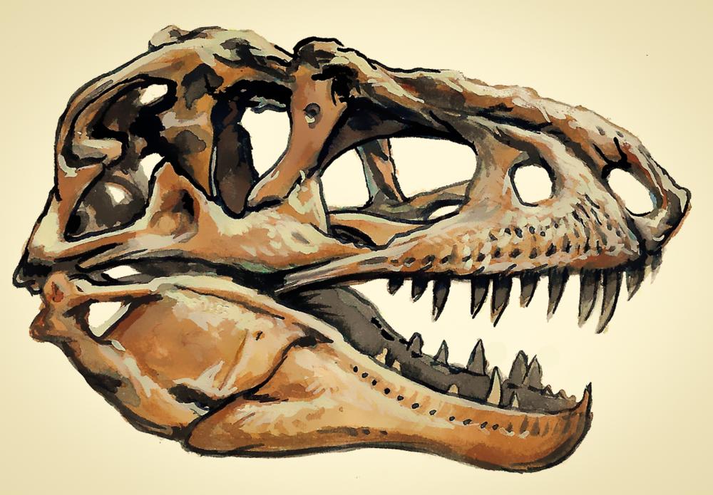 Daspletosaurus , gouache on paper, 2018