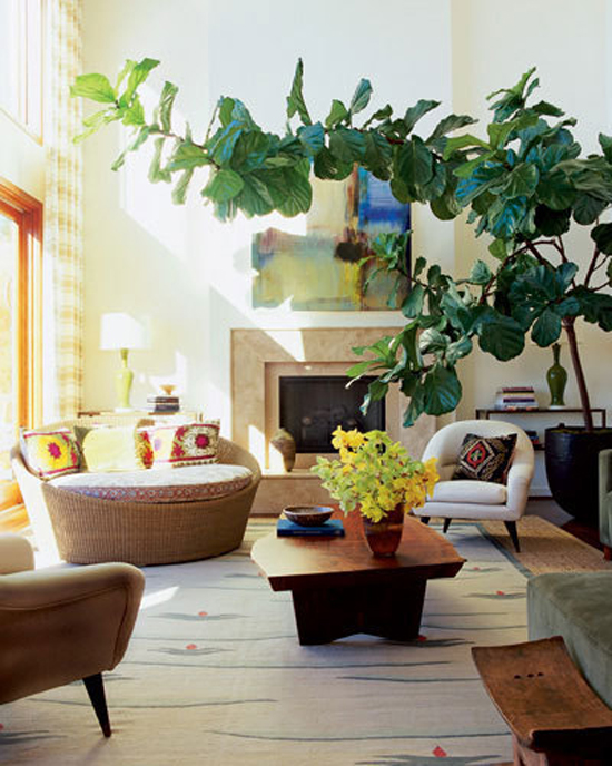 style-by-emily-henderson-fiddle-leaf-fig-5_rect540.jpg