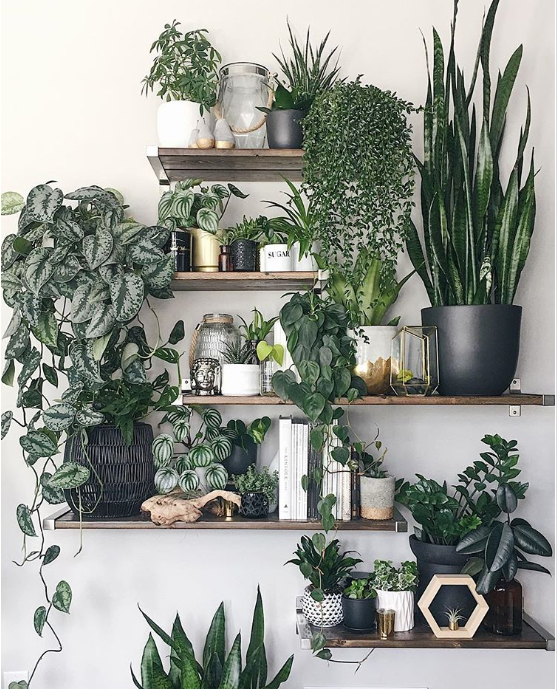 plant collection on shelf wall   source
