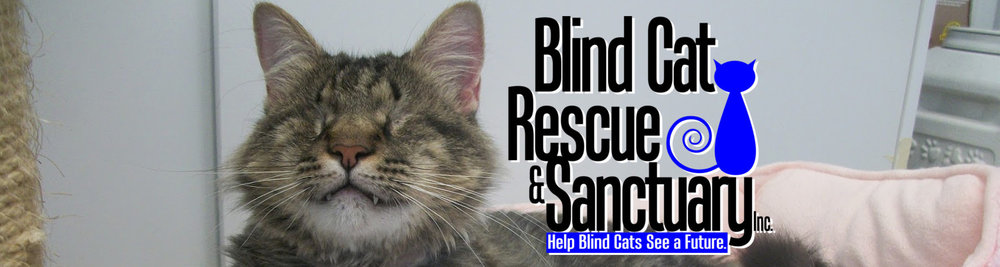 blindcatrescue.jpg
