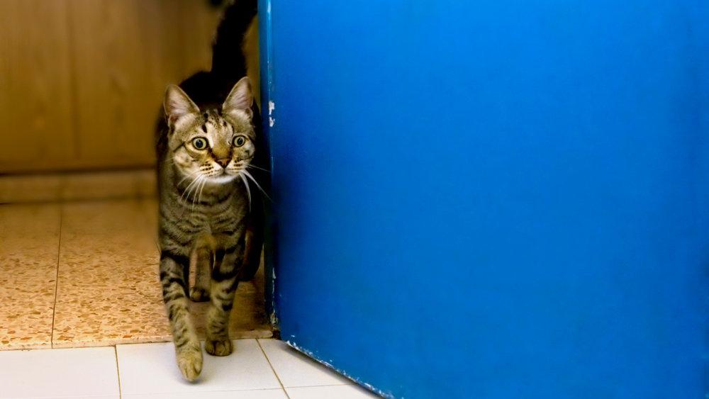 cat-door.jpg