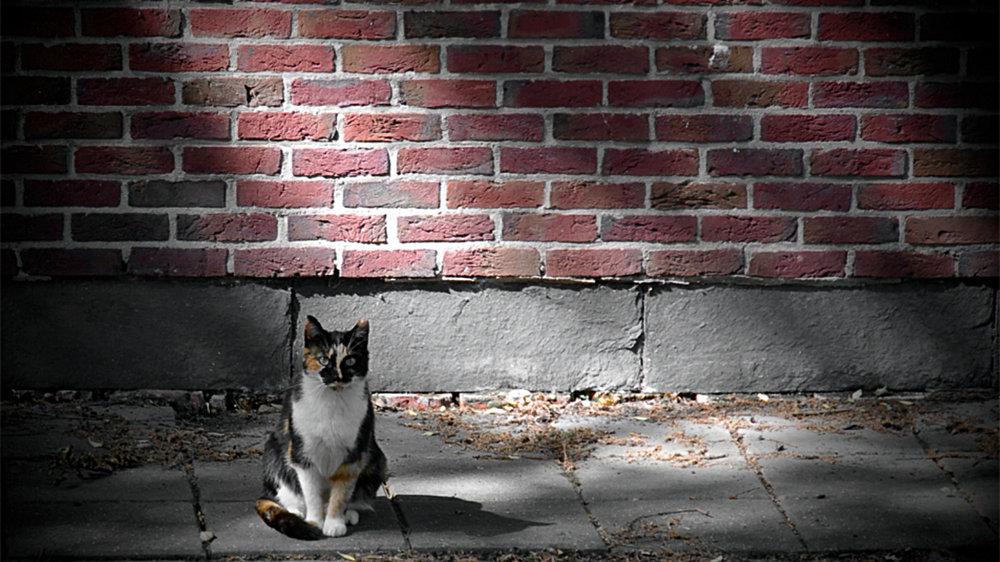cat-brick.jpg