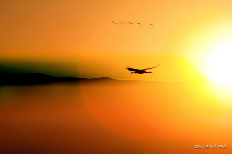 Bernardo Sunrise