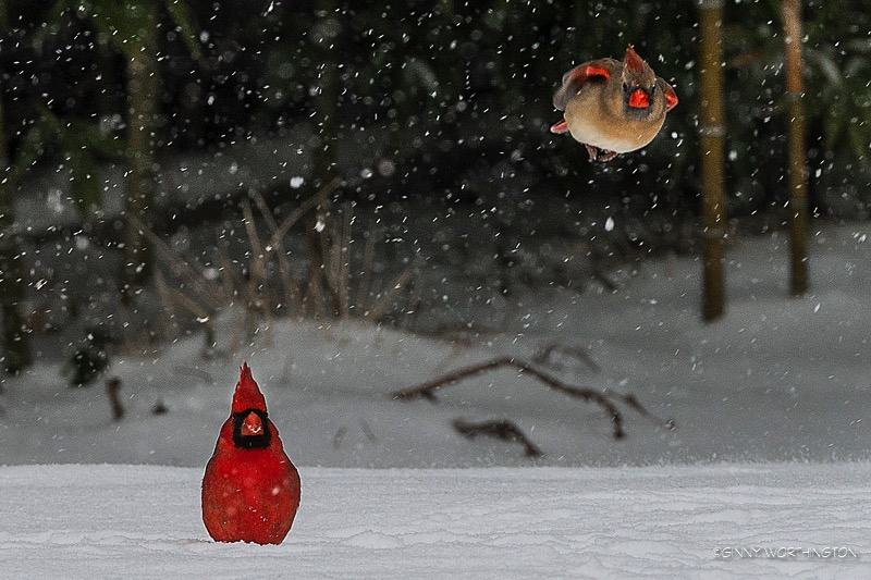 Fly by Birdie