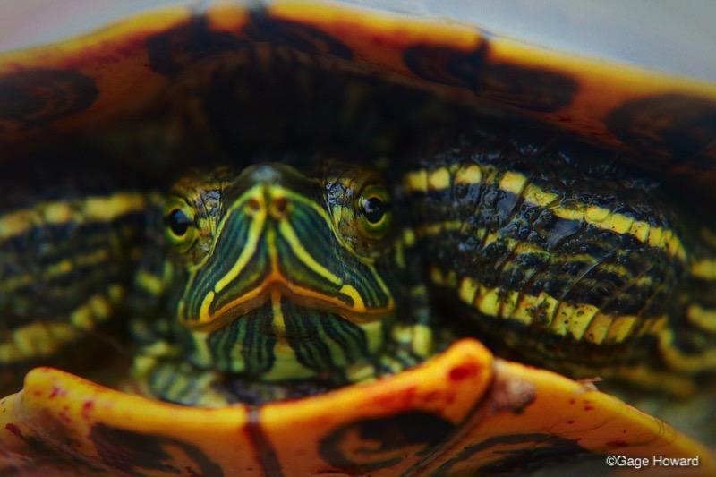 Turtle Macro