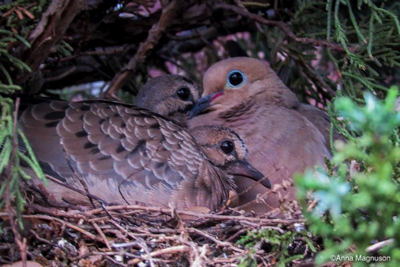 Cuddling Bird Family