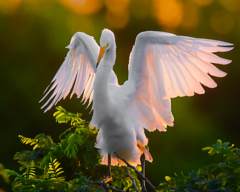 Flapping at Sunrise