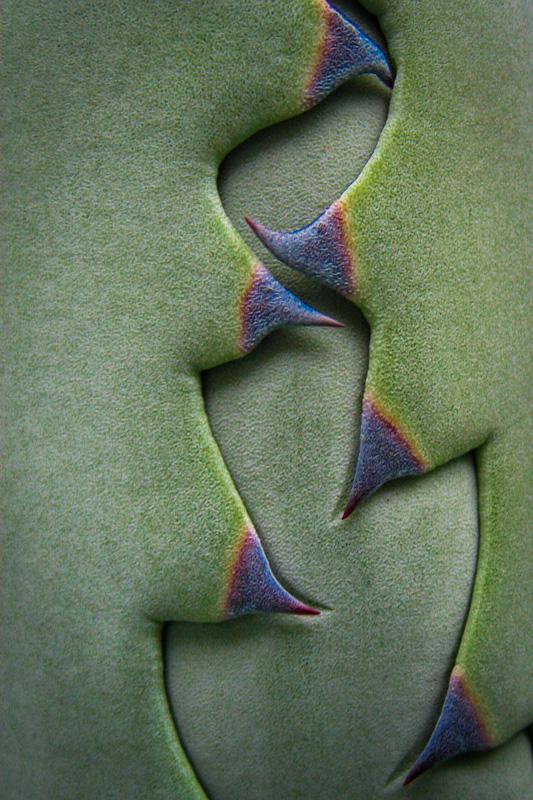 Agave Leaves 4382