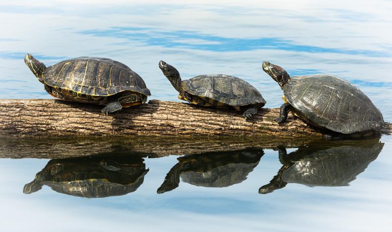 Turtle Heaven