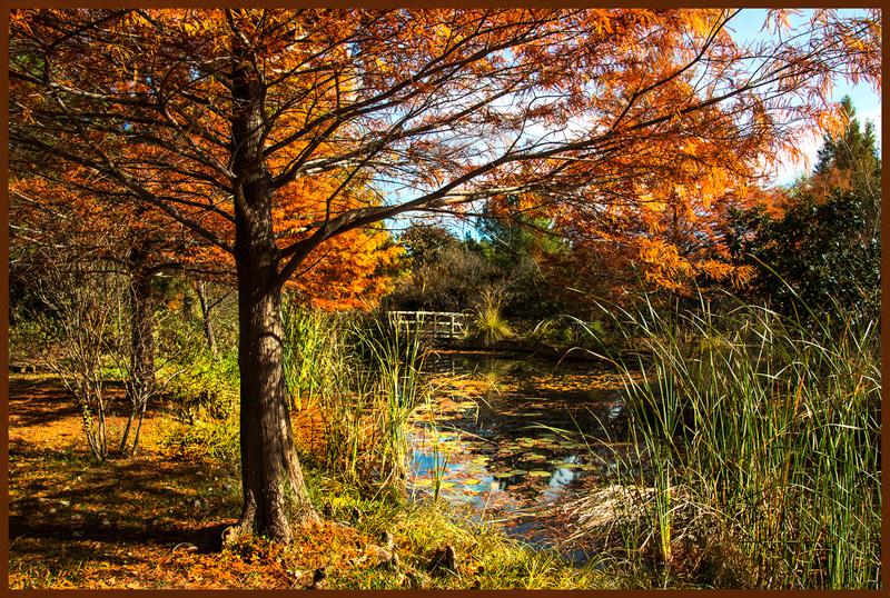 Landscape shot at Clark Gardens Mineral Wells, Tx