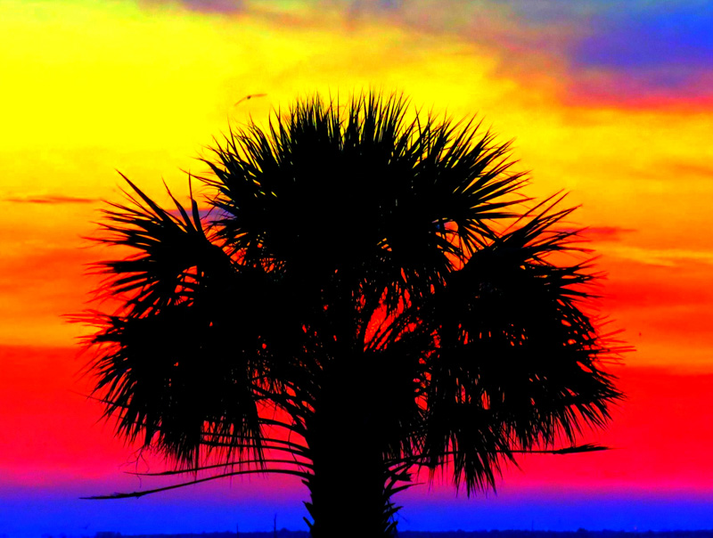 """Lucky Palm"""
