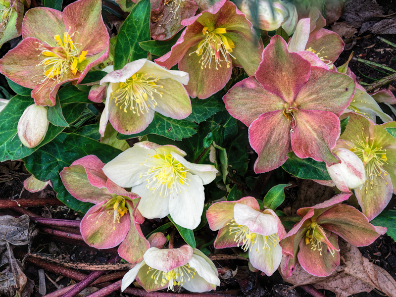 ahoywen1234@gmail[com~BeginnerIntermediate Adult~Floral~1.jpg