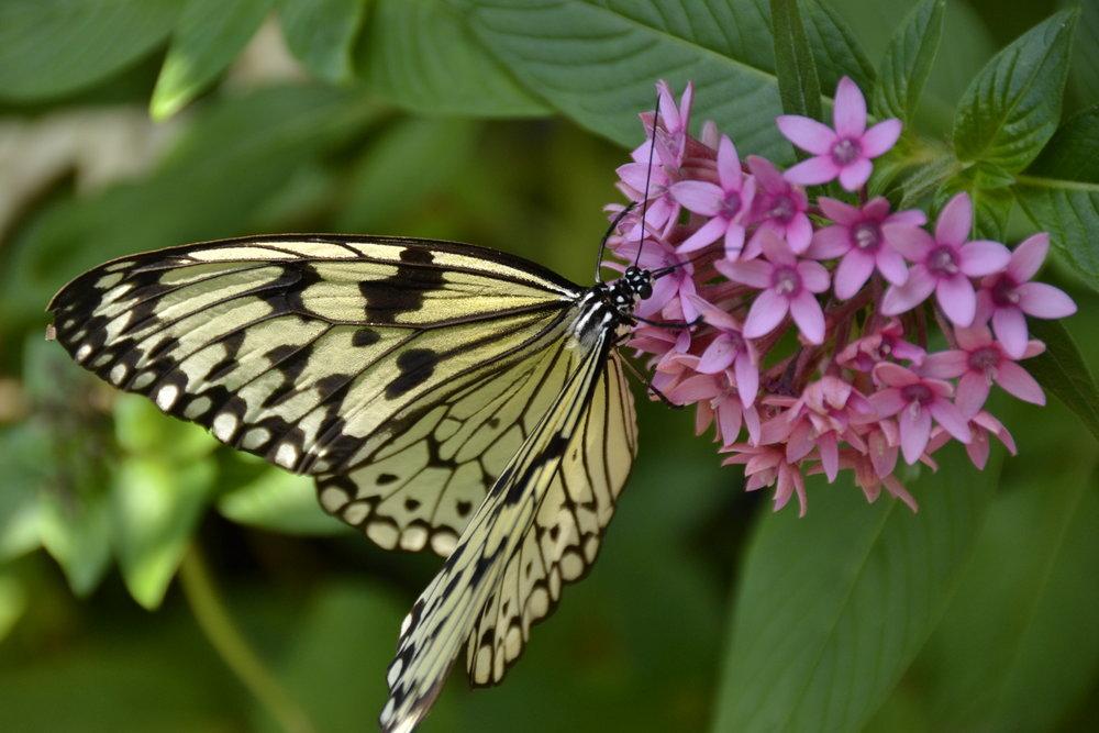 01-2019 Butterfly #1.JPG