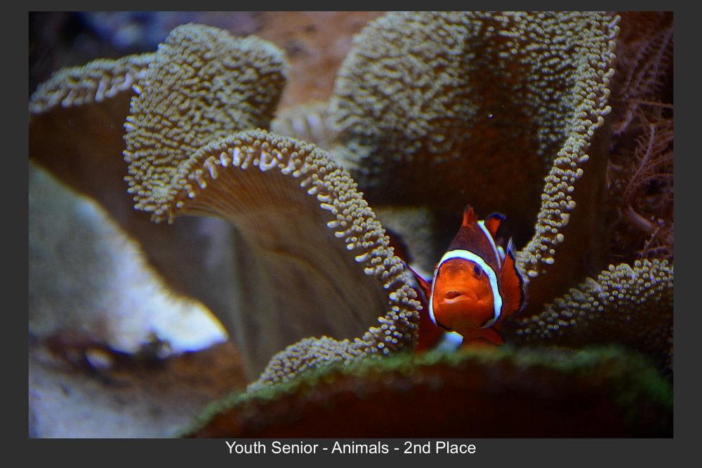 Youth Senior-10.jpg