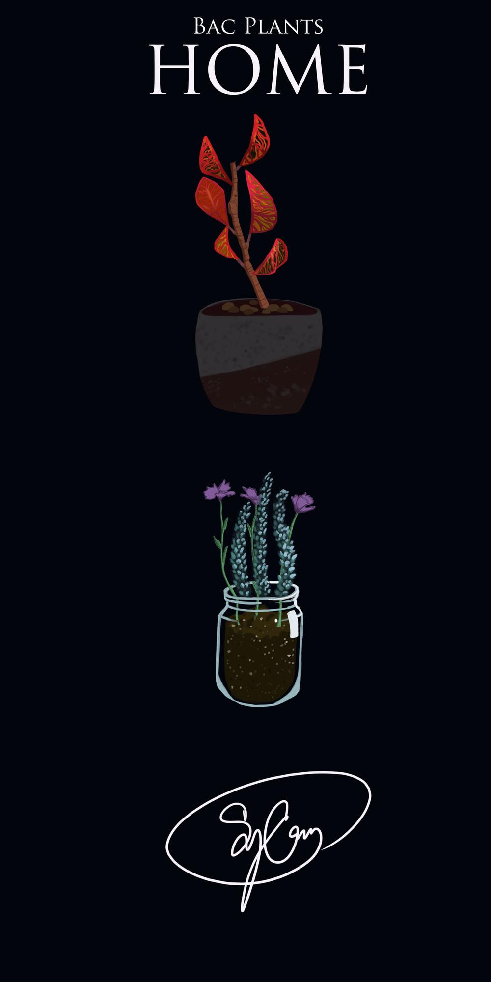 bac plants.jpg