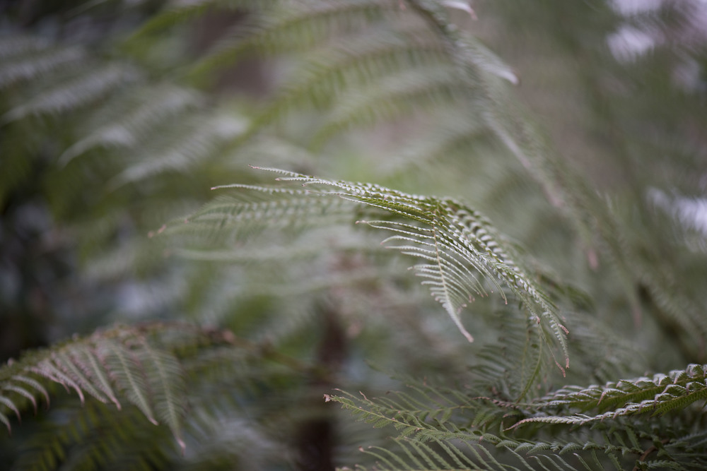 Fronds moving in the breeze