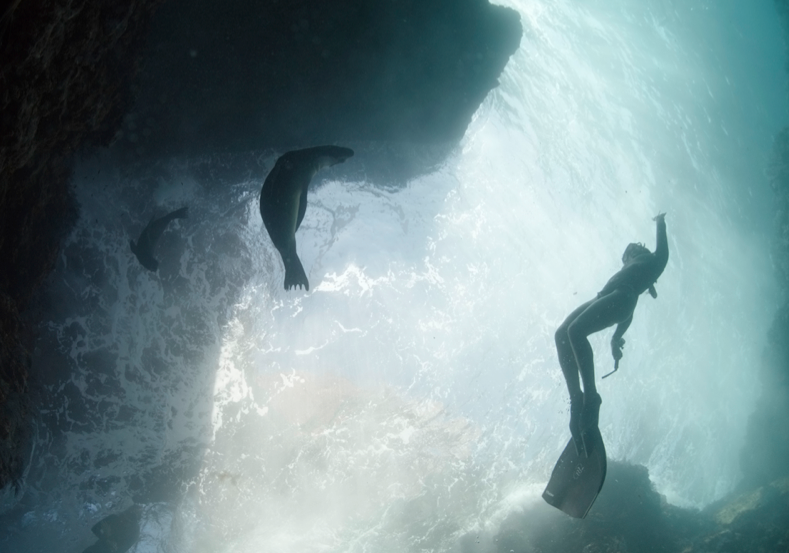 Jugando con un león marino bebe en  Isla Espiritu Santo La Paz