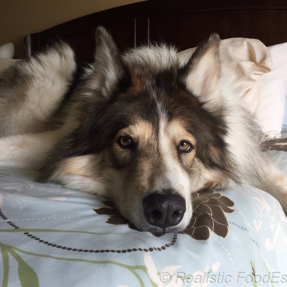 Nanuq on Bed 08062016.jpg