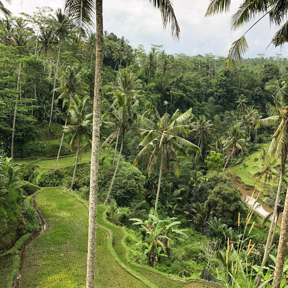 Tegalalang Rice Field in Gianyar, Bali