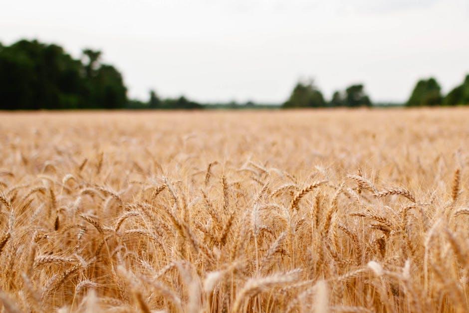 landscape-field-sonja-langford-sonja.jpg