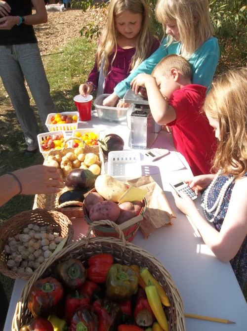 Second Graders measuring the harvest at the mock farmer's market.